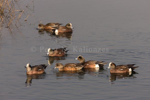 PKalionzesPhoto-1292