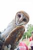 Barn Owl Banding in Nanjemoy