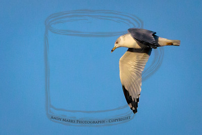 A gull in the early morning light.