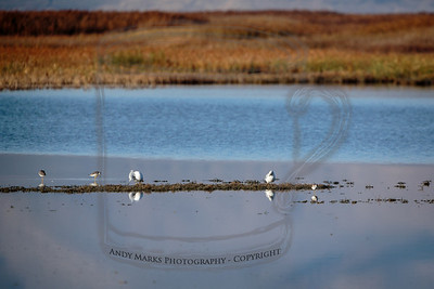 A few gulls and shore birds wading in the freshwater ponds.