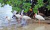 Key West Art Birds6 IMG_7035