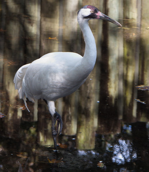 Homosassa Springs Wildlife Park, FZ300