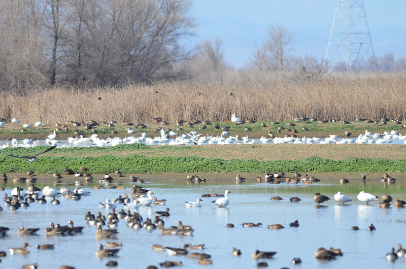 There was a viewing platform near the entrance where we saw this crowd scene.  This is a fraction of the birds present at this location.