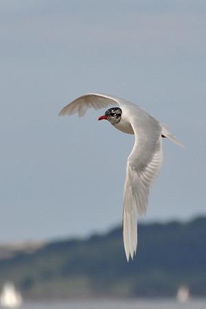 Birds, Cornwall