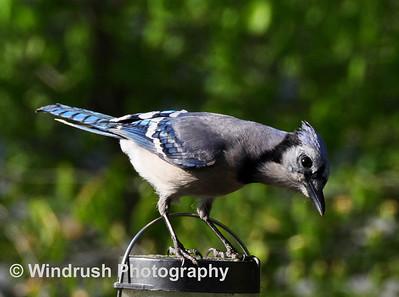 Birds, Maryland, USA