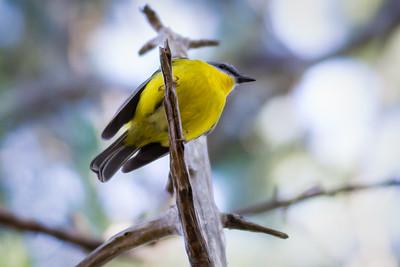 Birds in Noosa National Park, 2011. Photos by Des Thureson - http://disci.smugmug.com