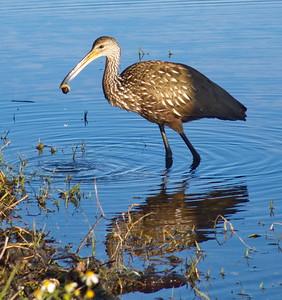 Flora & Fauna of Lake Henderson. 2016-2018