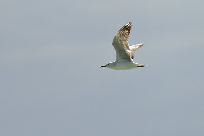 Birds & Surfing at Burleigh Heads National Park, Tuesday 4 August 2009. Photos by Des Thureson - http://disci.smugmug.com