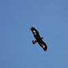underside-golden-eagle-lanjaron-27 dec 09_4228193972_o