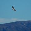 habitat-golden-eagle-lanjaron-27 dec 09_4227423587_o