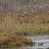 male - habitat - albufera - mallorca - 22 oct_4102140479_o