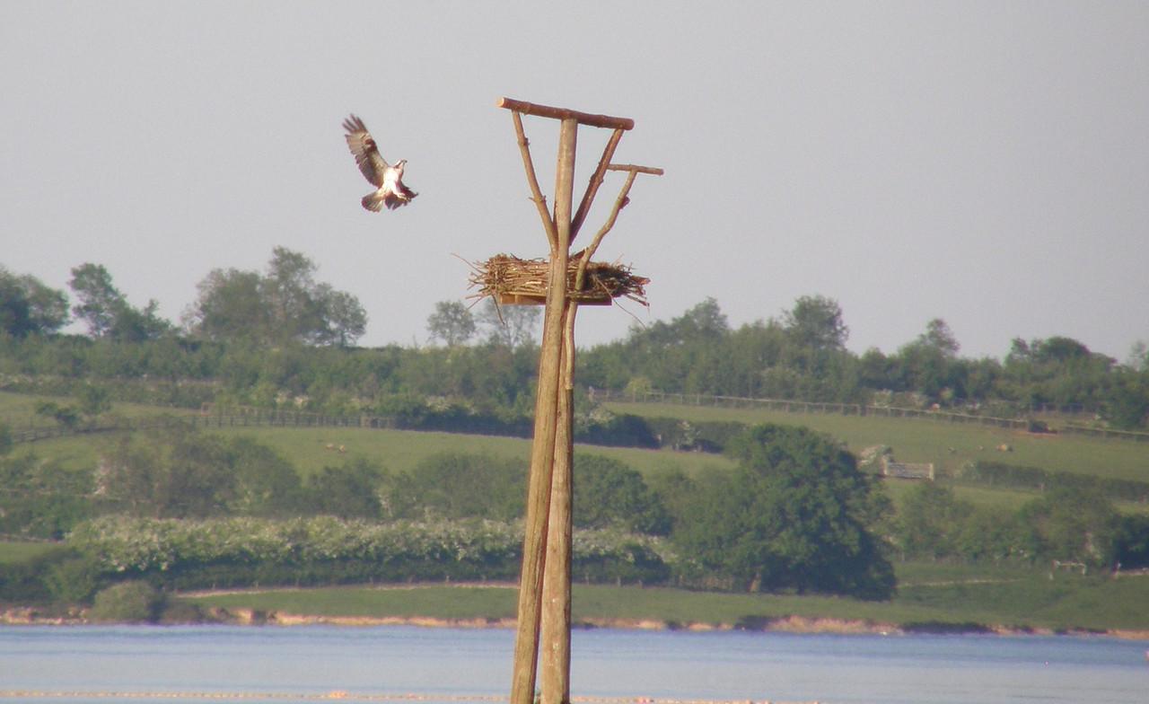 osprey Landing Rutland May 2010