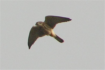 kestrel Rame October 2006