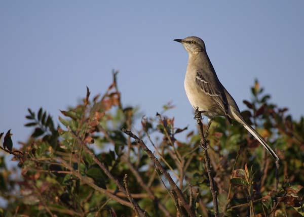 Birds of USA