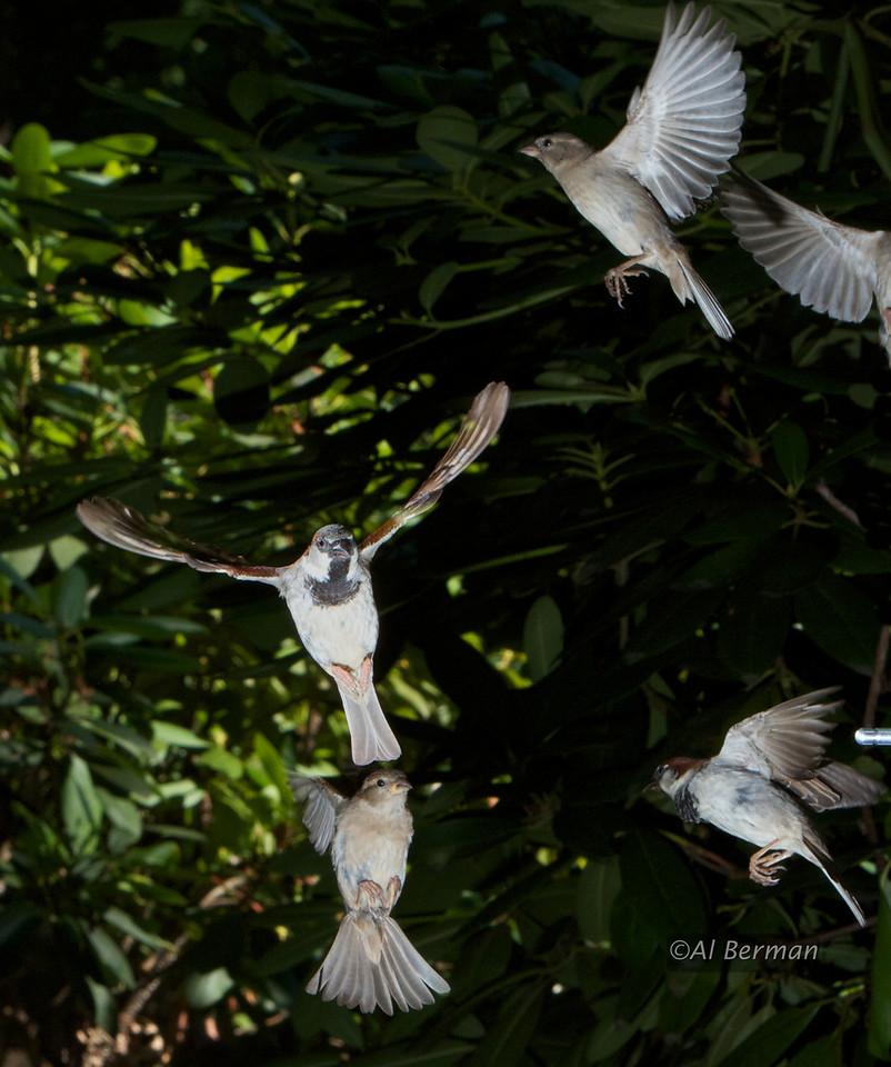 Sparrows surrounding the bird feeder