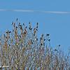 Swarm of birds in a tree