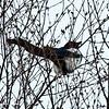Anooyance bird