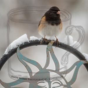 "Dark-eyed Junco (""Oregon"" variety), shot through the dining room window/screen on 19Feb12. LR4 Beta pp."