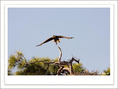Eagles 2009