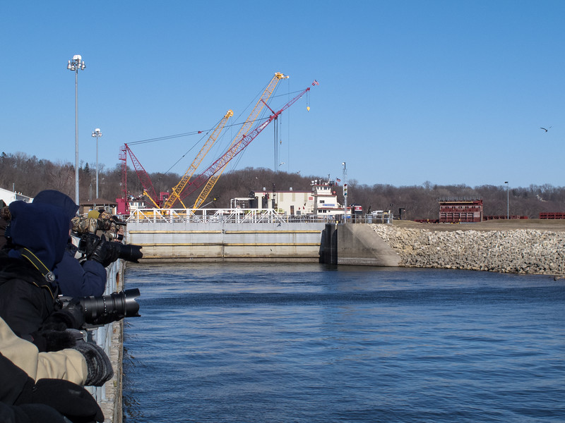 Bald Eagle Photographers<br /> Lock and Dam 14 on Mississippi River, Iowa
