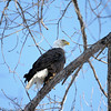 eagles 2-1-07 am 311adj