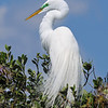 Great Egret<br /> New Symrna Beach, Florida<br /> 137-4790a