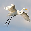 Great Egret<br /> New Symrna Beach, Florida<br /> 137-5989a