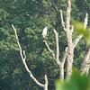 A Great Egret-Bryan Park 7-3-11
