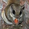 Closeup peanut eating
