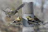 Birds 02-15-09-035_filteredps