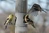Birds 02-15-09-030_filteredps