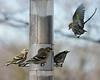 Birds 02-15-09-015_filteredps