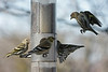 Birds 02-15-09-016_filteredps