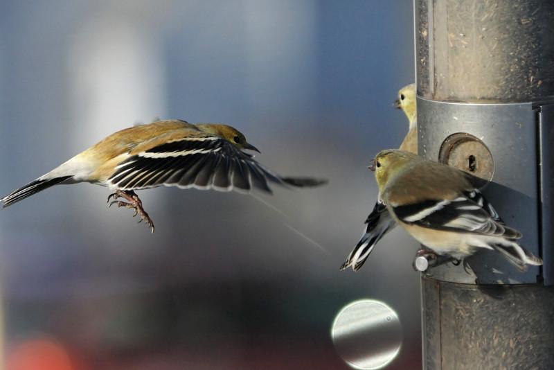 Birds 02-15-09-001_filtered