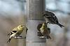 Birds 02-15-09-027_filteredps