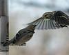Birds 02-15-09-013_filteredps