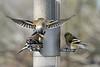 Birds 02-15-09-042_filteredps