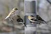 Birds 02-15-09-040_filteredps