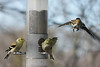 Birds 02-15-09-029_filteredps