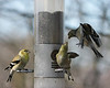 Birds 02-15-09-026_filteredps