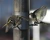 Birds 02-15-09-005_filteredps