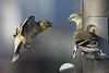Birds 02-15-09-002_filtered