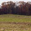 Sandhill Cranes at Jasper Pulaski Wildlife Refuge