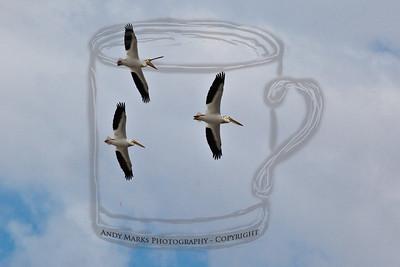 American Pelican, Spiral Jetty on Salt Lake