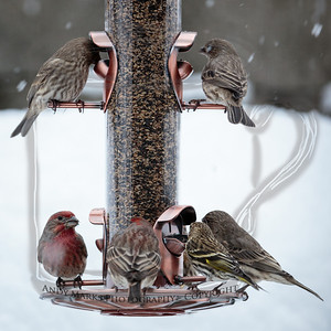 New feeder, seed, and snow: they ate half the seed in one day.