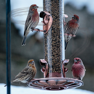 New feeder and hungry birds