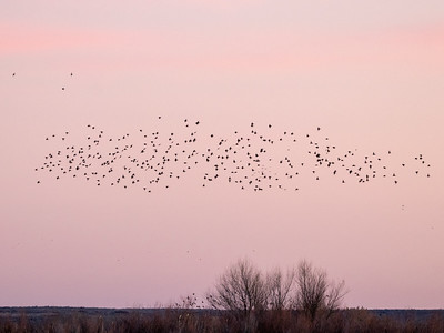2020-01-19  Sunset at Bosque Del Apache National Wildlife Refuge