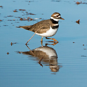 2017-11-19  Killdeer