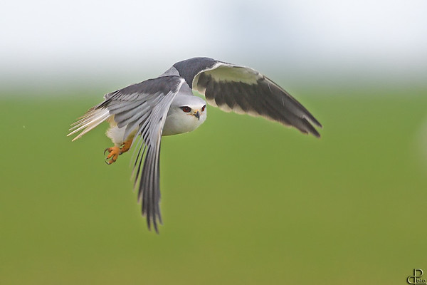 Kites - דיות ודאות