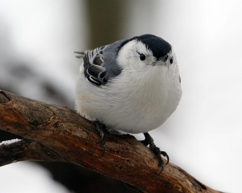 Birds 01-01-06 017ps